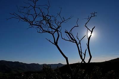 Photograph - Stunning Tree Silhouette - Blue Sky Sunlight by Matt Harang