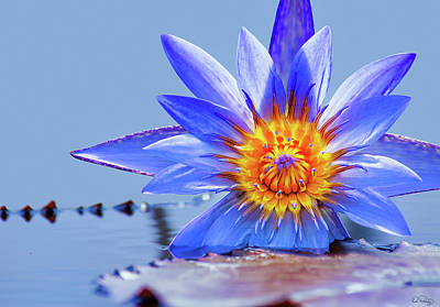 Photograph - Stunning Water Lily by Dee Browning