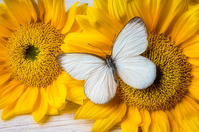 Photograph - Stunning White Butterfly by Garry Gay