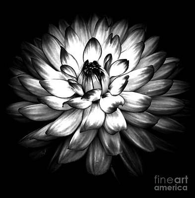 Photograph - Stunnining In Monochrome by Chalet Roome-Rigdon