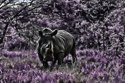 Styled Environment-the Modern Trendy Rhino Art Print by Douglas Barnard