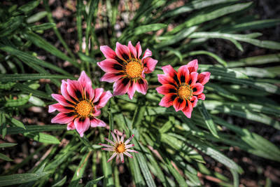 Digital Art - Stylized Flowers by Patrick Groleau