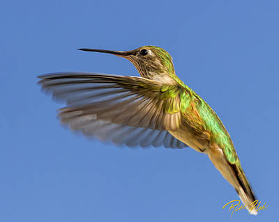 Photograph - Stylized Hummingbird In Hover by Rikk Flohr