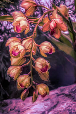 Orchid Photograph - Stylized Orchids by Tom Mc Nemar