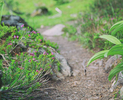 Photograph - Sub-alpine Douglasia by Kunal Mehra