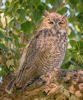Photograph - Sublime Owl by Loree Johnson