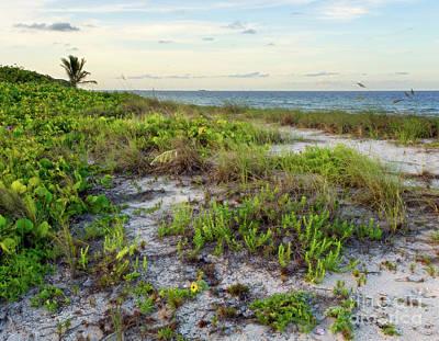 Sublime Subtropcial Sunset - Natural Florida Coastline Art Print