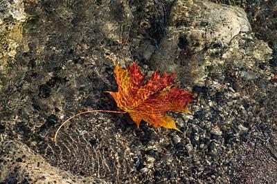 Photograph - Submerged Beauty - Sunny Ripples On A Maple Leaf by Georgia Mizuleva