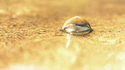 Photograph - Submerged Snail Shell by Jeanette Fellows