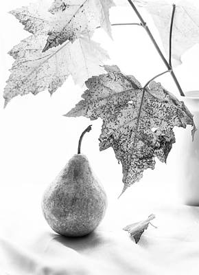 Grey Scale Photograph - Subtle Fall  by Maggie Terlecki
