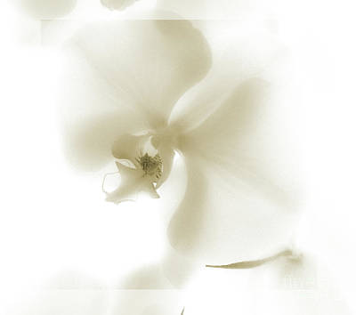 Photograph - Subtle Orchid by Karen Lewis