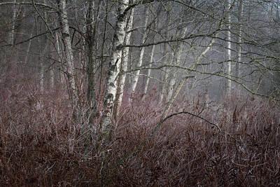 Photograph - Subtle Reds And Birch by Adam Gibbs