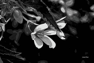 Photograph - Subtle Summer Wildflower Bw by Lesa Fine
