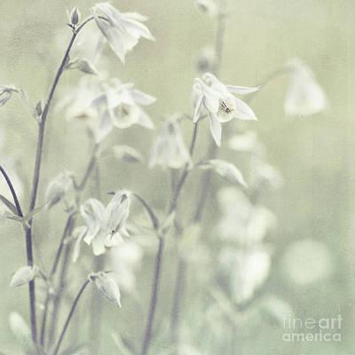 Photograph -  Subtlety by Priska Wettstein