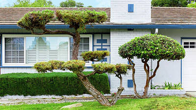 World War 2 Action Photography - Modern Suburban House with Topiary Hayward California 24 by Kathy Anselmo