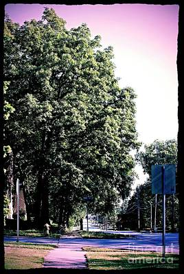 Frank J Casella Royalty-Free and Rights-Managed Images - Suburban Tree by Frank J Casella