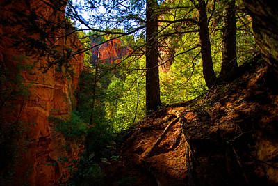 Hike Photograph - Subway Forest by Chad Dutson
