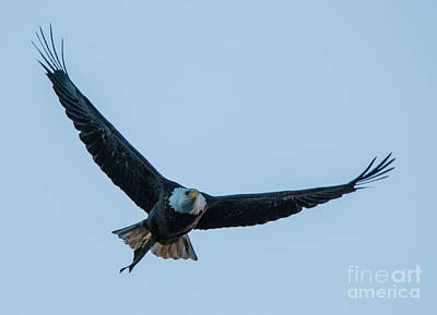 Photograph - Successful Bald Eagle by Jeff at JSJ Photography