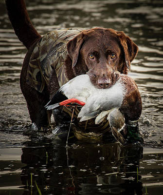 Photograph - Successful Retrieve by Jean Noren