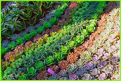 Photograph - Succulent 1 by Sonali Gangane
