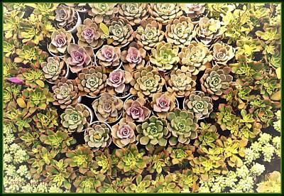 Photograph - Succulent 2 by Sonali Gangane