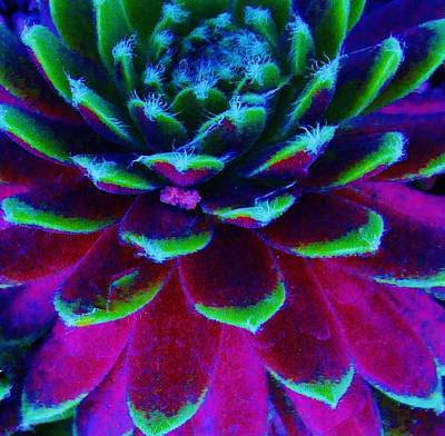 Photograph - Succulent Abstract by Sharon Ackley