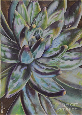 Painting - Succulent by Angela Armano
