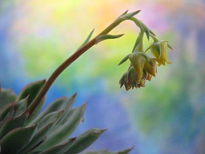 Photograph - Succulent At Dawn by Angela Davies