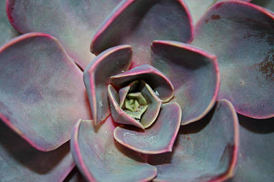 Colorful Button - Succulent by Ben Zell