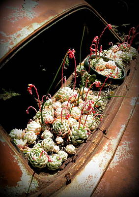 Photograph - Succulent Chevy by Guy Pettingell