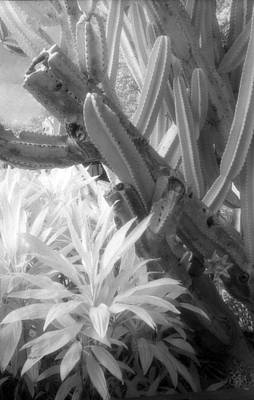35mm Photograph - Succulent Delight by Richard Rizzo