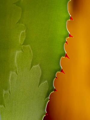 Photograph - Succulent Edgework by Jean Noren