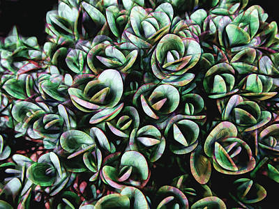 Photograph - Succulent Fantasy by Ann Powell