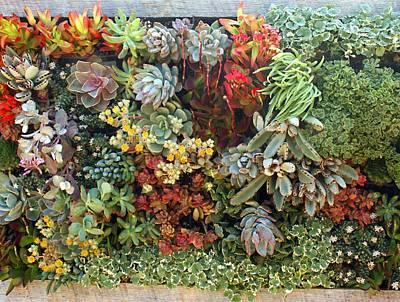 Photograph - Succulent Garden 2 by Ellen Henneke