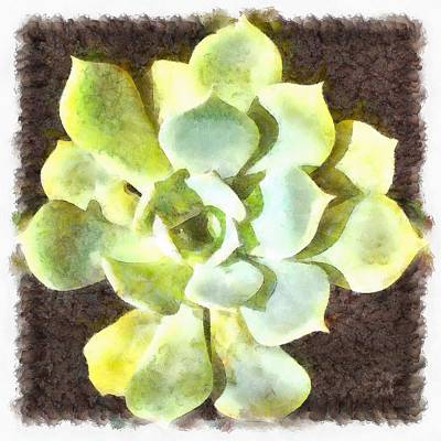 Painting - Succulent Garden Plant With Dew by Tracey Harrington-Simpson