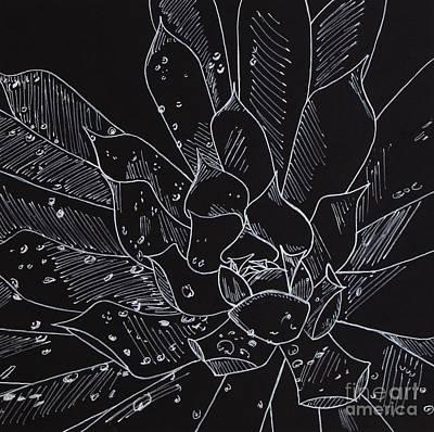 Rain Drawing - Succulent by Helen Lea