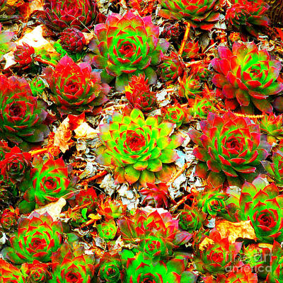 Photograph - Succulent Hens And Chickens by Peter Gumaer Ogden