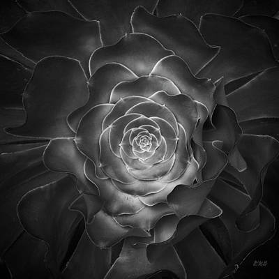 Photograph - Succulent I Bw by David Gordon