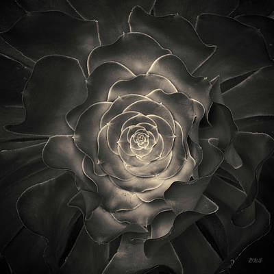 Photograph - Succulent I Toned by David Gordon
