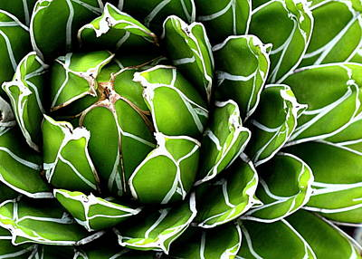 Photograph - Succulent In Color by Ranjini Kandasamy