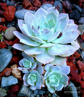 Painting - Succulent by Jenny Lee