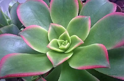 Photograph - Succulent Leaves 6 by Duane McCullough