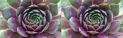 Photograph - Succulent Leaves Nautral Abstract Stereo 3d by Duane McCullough