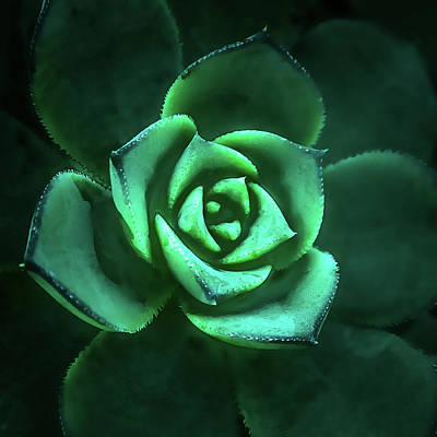 Photograph - Succulent Macro Beauty by Julie Palencia