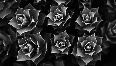 Photograph - Succulent by Marlo Horne