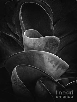 Vintage Signs - Succulent Plant BW by Mike Nellums