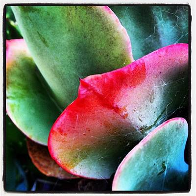 Wall Art - Photograph - #succulent #plantlife #plantporn by Alicia Boal