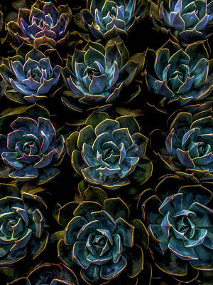 Photograph - Succulent by Rod Sterling
