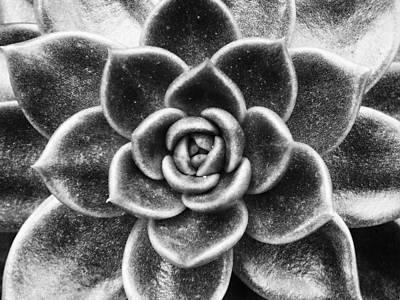 Succulent Symmetry Art Print