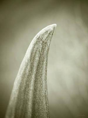 Photograph - Succulent by Wim Lanclus